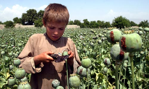 ** FILE ** In this May 17, 2007 file photo, an Afghan boy collects resin from poppies in an opium poppy field in the Khogyani district of the Nangarhar province, east of Kabul, Afghanistan. Iran is at the front lines of the war on drugs flowing from Afghanistan, stopping vast quantities of opium and heroin before they can reach western Europe, but Western nations including the United States recently warned Iran for the first time that it must halt a key part of its nuclear program to get any additional help fighting Afghan drug lords. (AP Photo/Rahmat Gul, File)