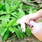 15 домашни органични разтвори за градински проблеми