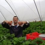 Англия. Българин направи най-голямата ферма за ягоди и малини