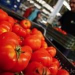 Геноцид срещу България – освен отровни яйца от Европа, ядем вносни домати пръскани с ДДТ!