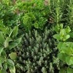 Три мерки за финансиране при отглеждането на лечебни билки в България
