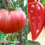 Уникални български храни ще бъдат регистрирани в Брюксел