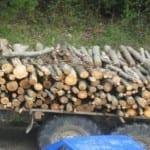 Спецченгета удариха дървената мафия в Търново – сложиха белезници на горски шеф