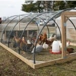 Мобилна каравана за кокошки