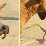 Бездомно куче спаси новородено бебе, изхвърлено в кофа за боклук