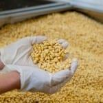 Глобиха вносител на 22 тона ГМО соя в Камено