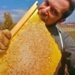 Пчелата като домашен любимец