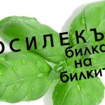Лечебни свойства на билката Босилек