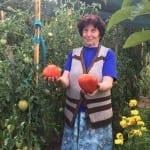Стопанка от Гложене разкри тайната си рецепта за опазване на тези гигантски домати (СНИМКА)