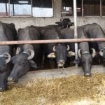 Семейна ферма под Балкана произвежда здраве