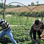 Британски депутат: Българските работници не могат да използват мобилен телефон