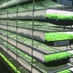 Идва ерата на вертикалното земеделие (ВИДЕО)