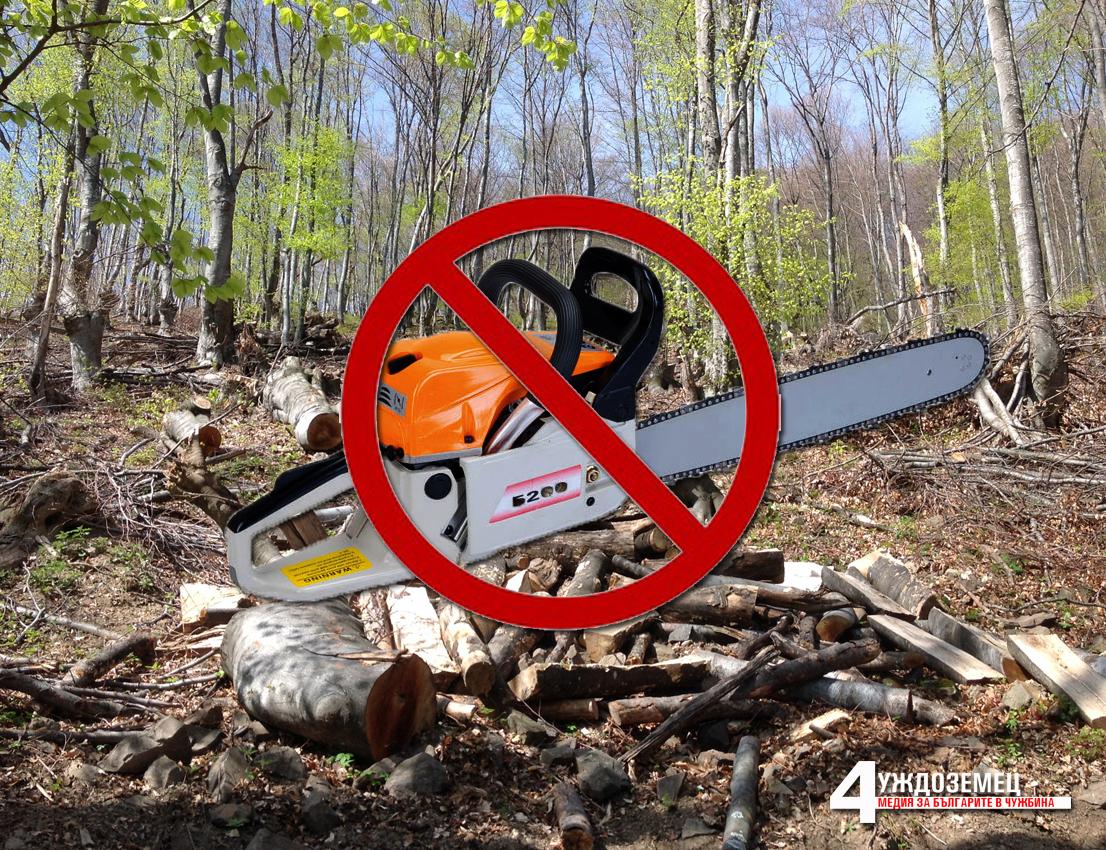 Албания въведе 10-годишна забрана за изсичане на дървета за промишлени цели