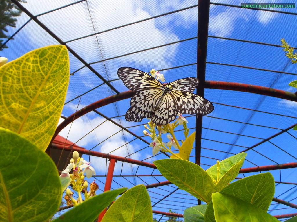 Живи пеперуди ще летят край туристите в пловдивски музей
