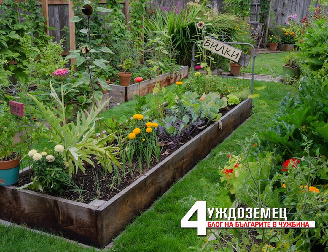 Магданозът – ако се посади под насажденията с домати, подсилва аромата им