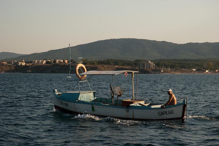 Южното Черноморие ври от сафрид