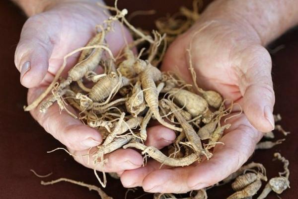 """Манастирската билкарка баба Елена: """"Ако не искаш да те боли, изкопай тези 3 корена"""" – това е ключът към здравето!"""
