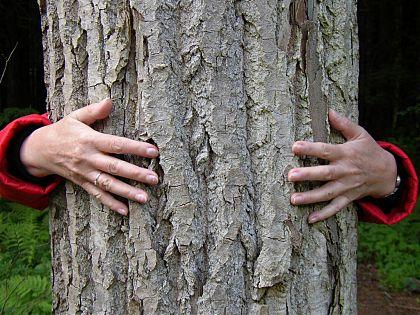 Дърветата лекуват