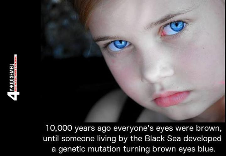 Сините очи идват от специфичен ген в региона на Черно море