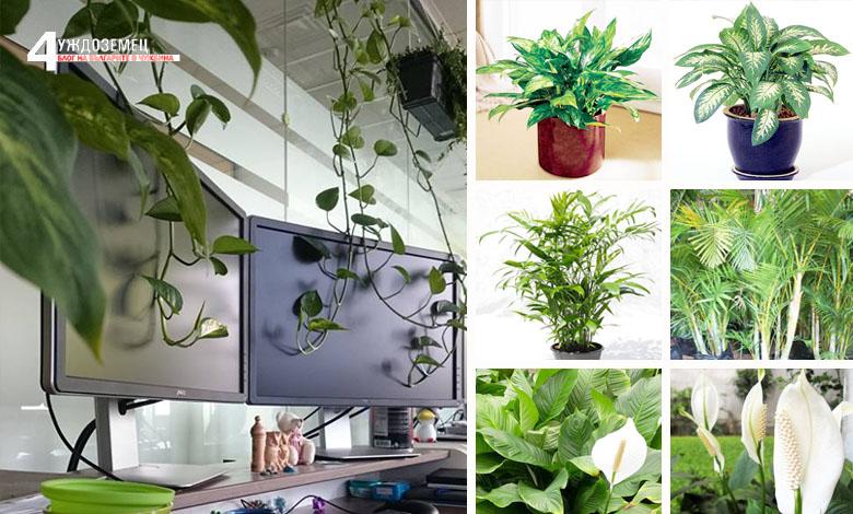 8 растения, които прочистват въздуха у дома и офиса