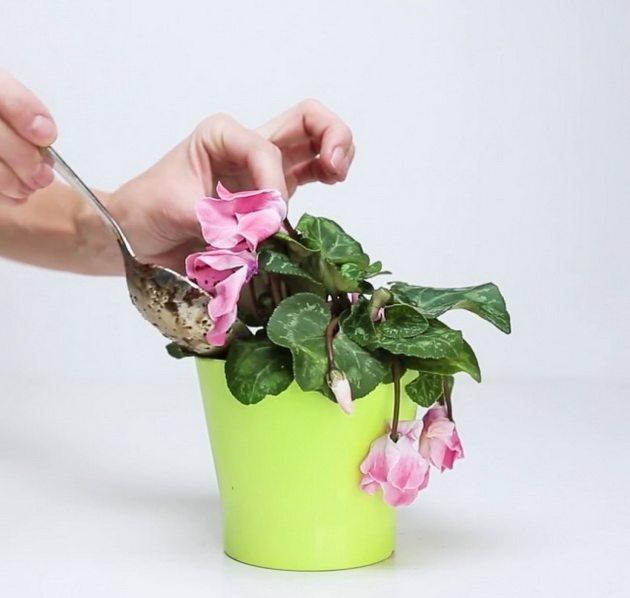 Върнете растенията към живот с тор от банан, кафе и яйца