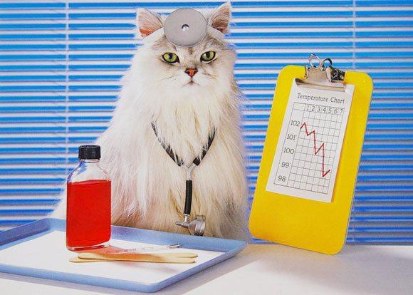 Учените са доказали – котка трябва да има във всеки дом !