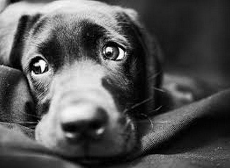 Българският Хачико! Куче чака 2 години починалата си стопанка