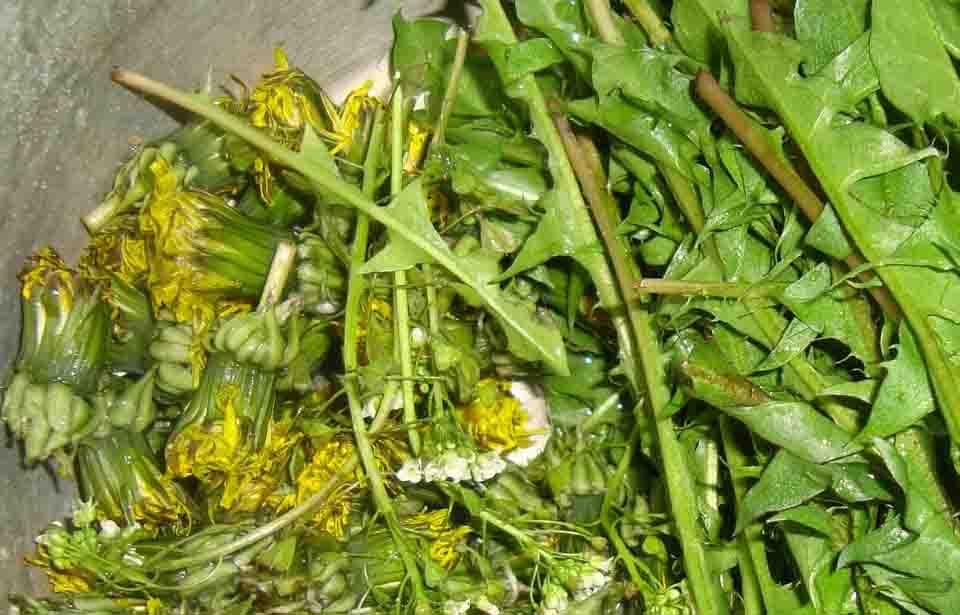 Салата от глухарче, зелен лук, домати и краставици