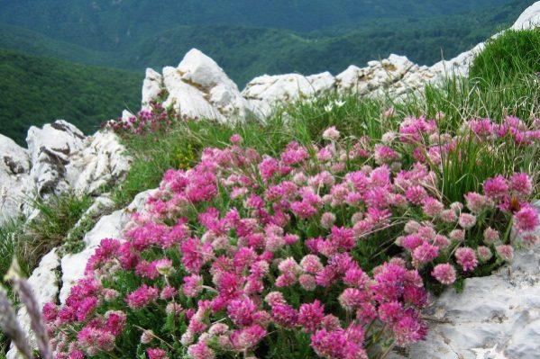 Местността Узана в Стара планина – едно уникално приключение