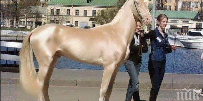 Най-красивият кон в света прилича на изваян от злато. Определено трябва да го видиш!