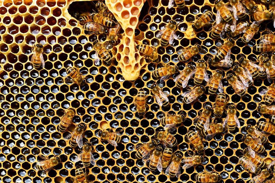 Важно за всички. Пчелите в България загиват! Пчеларите на бунт, искат от кабинета пълна забрана на..