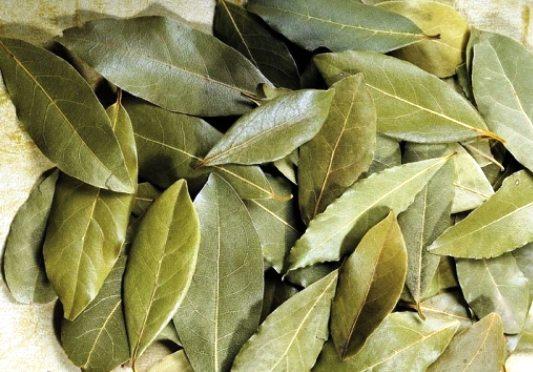 Дафинов лист доказано лекува болните стави