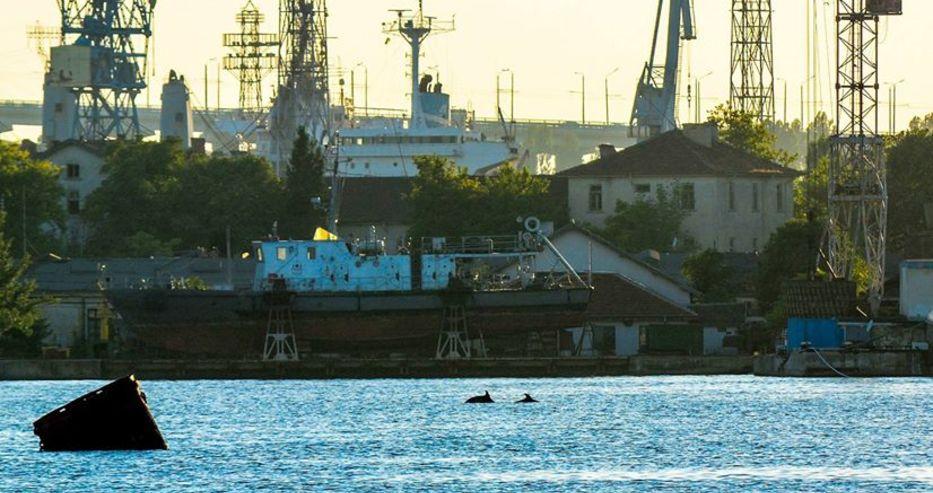 Семейство делфини живее във Варненския залив (Снимка)