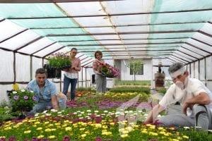 Трима с три оранжерии и 18 000 стръка цветя в Първомайци